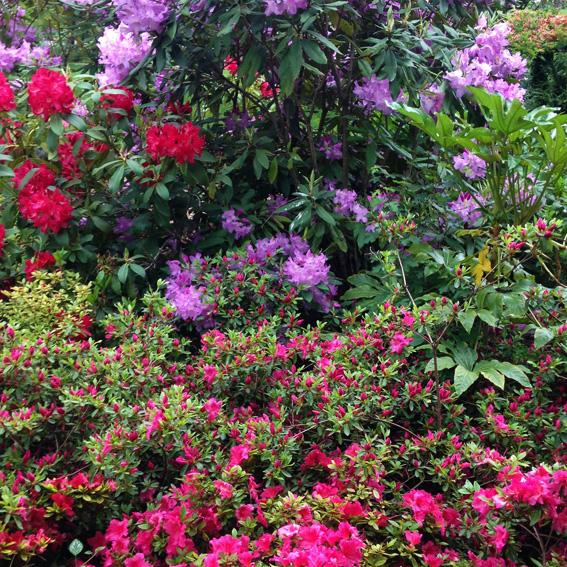 toutes nos prestations création jardin