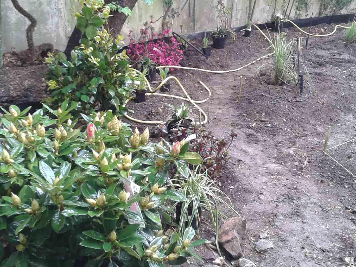Début des plantations : ce jardin étant très à l'ombre on privilégie les plantations d'azalées rhododendrons qui apprécient ce genre d'exposition