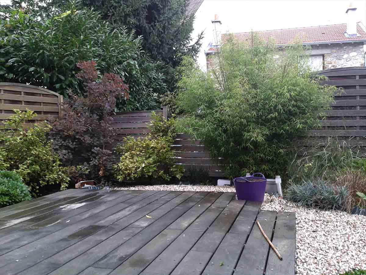 Bambou fargesia et dans l'angle gauche un Cotinus