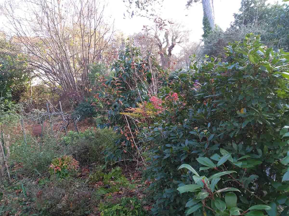 La haie et le massif d'arbustes qui la longe