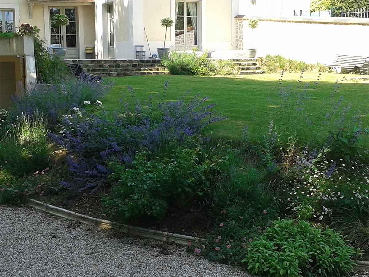 Sous un autre angle, les bleus prennent le dessus avec la floraison des Nepetas six hill'sgiants