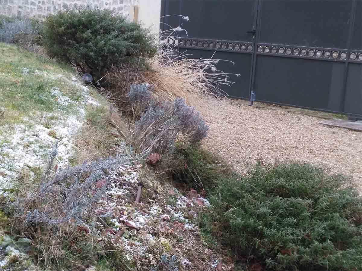 En hiver, les feuillages persistants prennent le relai et permettent de conserver la structure du jardin